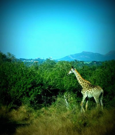 SouthAfrica7.jpg