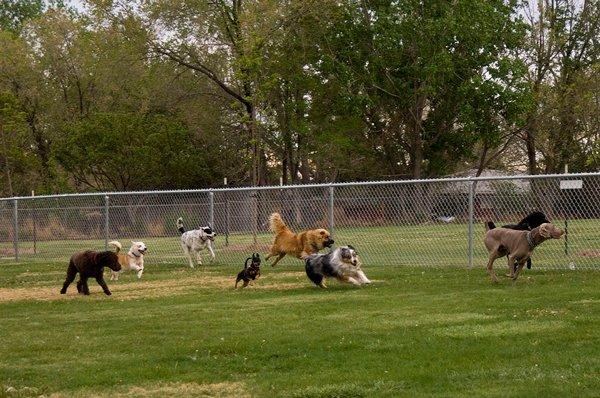 dog-park.jpg
