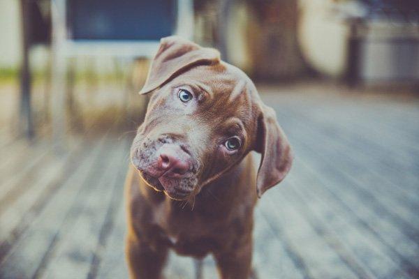 DogBlogPost4.jpg