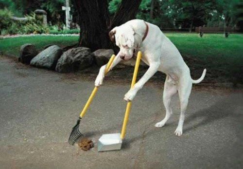 Housebreaking a dog
