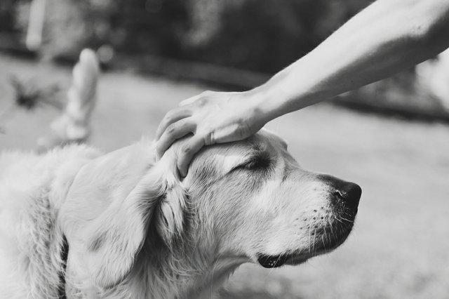 petting dog.jpg