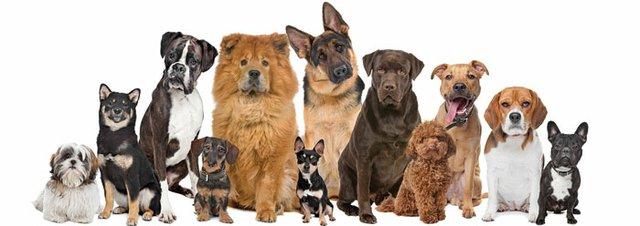 choosedog.jpg