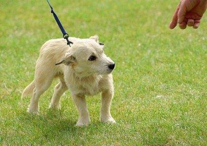 nervousdog.jpg