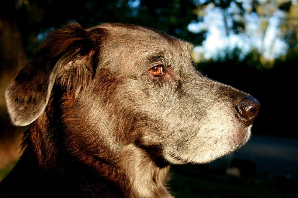 Free Older Dogs Roanoke Va