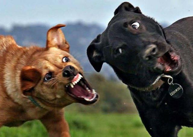 dog fight 2.jpg