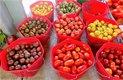 Optimized-cherry tomatoes.jpg