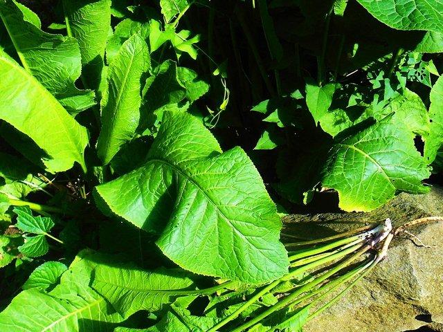 Optimized-horseradish.jpg