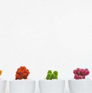 Plush Potted Plants tile.jpg