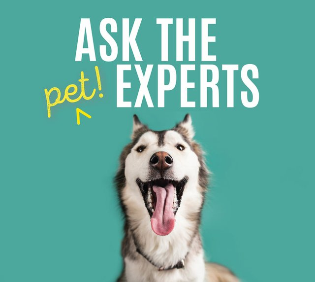 Ask-Pet-Experts.jpg