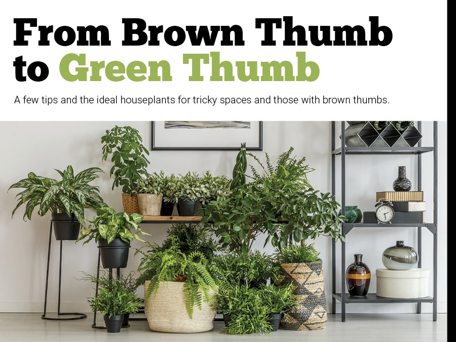 From Brown Thumb to Green Thumb - TheRoanoker com
