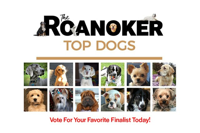 Top-Dogs-Finalists-homepage.jpg