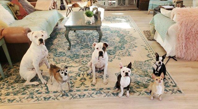 Puppy Bowl Photo 2.jpg