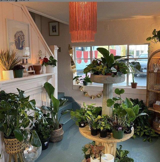 Gatewood Botanicals Interior.png