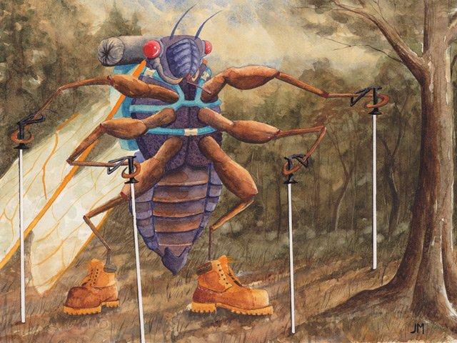 Hiking Cicada
